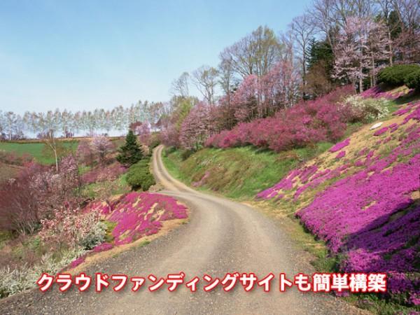 荒れ果てた道を花で埋め尽くしたい!